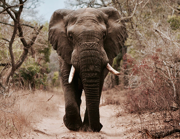 Animal Conservation in South Africa