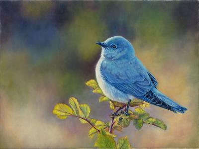 """Mr Bluebird"""