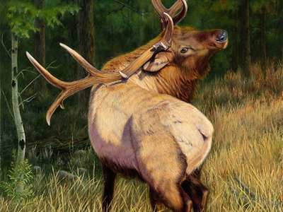 """In The Presence of Royalty"" Winner of the 2016 Rocky Mountain Elk Foundation Premier Art Program Honorable Mention"